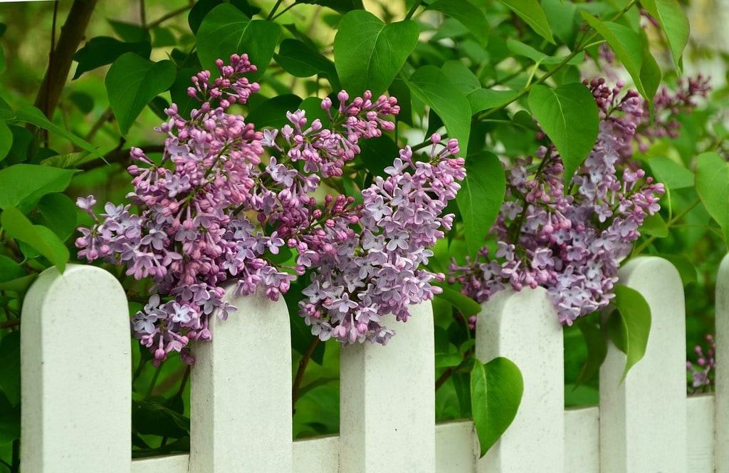 Quel brise-vue pour votre jardin ?